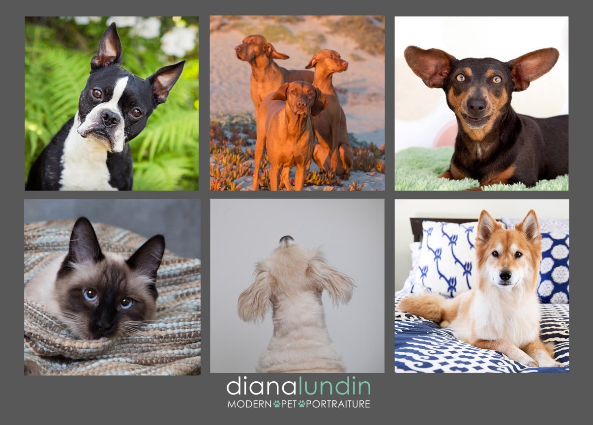 los angeles pet photography postcard