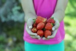 Freshly Picked Strawberries. Knoxville Photographer